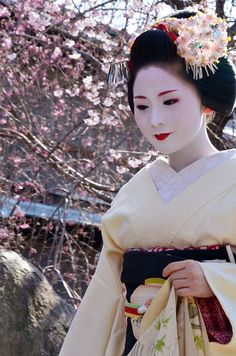 Mameharu under cherry blossoms by CHABASHIRA KYOTO on Flickr