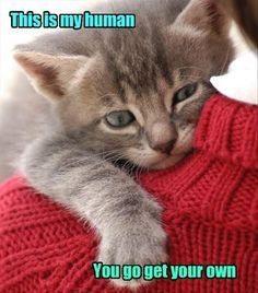 Get your own human