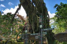 Top Six Things You Must Do at Pandora: World of Avatar - Living By Disney Avatar Disney World, Walt Disney World, New Pandora, Alien Creatures, Open Up, Plan Your Trip, Fun Drinks, Animal Kingdom, Great Places