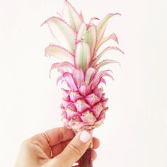 Tiny pink pineapples