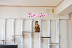 全国の猫好きな方のために猫ちゃんのための家づくりをまとめました。キャットウォーク、キャットドア、キャット柱!?まで!猫好き必見です!!