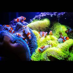 Saltwater Aquarium - Find incredible deals on Saltwater Aquarium and Saltwater Aquarium accessories. Let us show you how to save money on Saltwater Aquarium NOW! Coral Reef Aquarium, Saltwater Aquarium Fish, Saltwater Tank, Marine Aquarium, Aquarium Fish Tank, Freshwater Aquarium, Aquarium Ideas, Marine Tank, Marine Fish