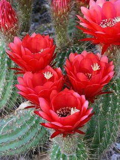 Landscaping Ideas from the Desert Botanical Garden