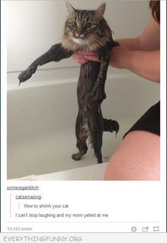 funniest tumblr text post this is how you shrink a cat