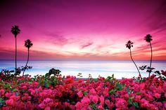 pink sky and pink bougainvillea San Clemente, California Nature Rose, Pink Nature, Nature Nature, Nature Images, San Clemente California, California Dreamin', Beautiful World, Beautiful Places, Beautiful Sunset