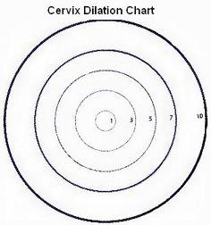 96 best my dream images certified medical assistant exam med Entry Level Phlebotomist Resume Sample cervical dilation chart is cervical dilation an early sign of labor cervical dilation chart