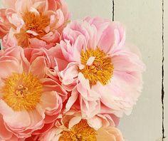 Gorgeous Pink Peony Petals!!