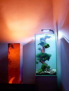 10 Tips on Designing a Freshwater Nature Aquarium Aquarium Setup, Home Aquarium, Nature Aquarium, Aquarium Design, Aquarium Fish Tank, Planted Aquarium, Aquarium Aquascape, Colorful Fish, Tropical Fish