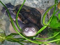 Ridiculously photogenic TURTLE smiles for the camera!