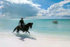 Horse in Aruba   Stuck in Customs