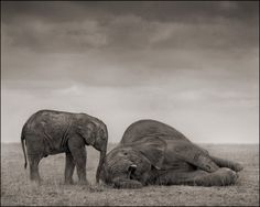 """Within the Amboseli ecosystem of Kenya and northern Tanzania, the Big Life teams have dramatically reduced the level of killings of animals. Elsewhere, however, the problem remains rampant."" Picture: Nick Brandt"