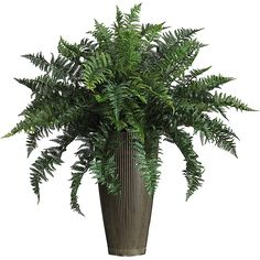 Nearly Ruffle Fern Silk Plant with Decorative Vase