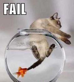 goldfish-1, cat-0
