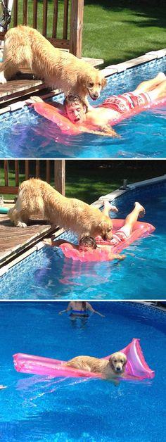 Golden Retrievers love water
