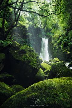 The luscious Grotto, by Stefan Hefele...  #Nature #Paradies #Portugal #SaoMiguel #Vegetation #adventure #beam #fairytale #green #grotto #luscious #moss #mystic #waterfall