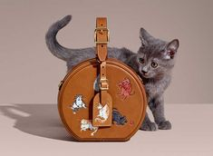0cae7d1d7fd4 Such Adorable Kitten Who Models Louis Vuitton s New Catogram Collection  Featuring Grace Coddington s Art.