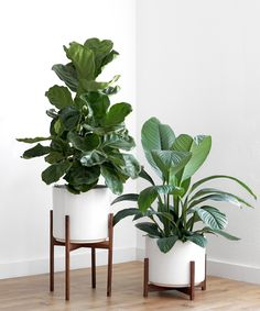 Large Mid Century Modern Planter, Plant Pot with Shorty Plant Stand - Ceramic Pot and Wood Stand Large Indoor Plants, Indoor Plant Pots, Outdoor Plants, Indoor Plant Stands, Large Plant Pots, Indoor Herbs, Indoor Gardening, Container Gardening, Modern Planters