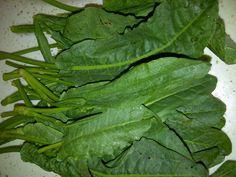 Morning Glory Plant, Aloe, Weed, Natural Remedies, Spinach, Herbalism, Plant Leaves, Herbs, Vegetables