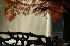 Autumn in park Dan, Autumn, Wall Art, Outdoor Decor, Nature, Painting, Naturaleza, Fall Season, Painting Art