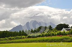 Cape town wine-route South Africa  agriculture vineyards and wine growing near the  franschhoek  stellenbosch mountains La-motte mountains winelands capetown southafrica vines producer wine route