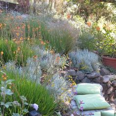 Hillside garden filled with Mediterranean plants and built-in stone bench. Eileen Kelly, Dig Your Garden Landscape Design. Hillside Garden, Hillside Landscaping, Dry Garden, Garden Shrubs, Bush Garden, Landscaping Design, Rock Garden Design, Garden Landscape Design, Landscape Plans