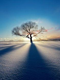 "following-thesun: ""Treeclipse"" by Chris Williams #beauty #nature #tree #sun"