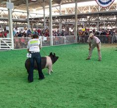 Getting it done in the show ring, Show pigs, Iowa State fair, love the stockshow life, love these kids, love these animals, 4H, FFA, livestock shows