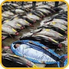The Tuna Fish Sleeping Bag is Perfect for High Seas Sleepovers #sleepingbags #camping trendhunter.com