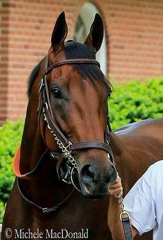 American Pharoah...LOVE this horse!!