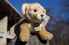 Roar to adore! Surprise your sweetie with a lion cub sponsorship (and an adorable plush approximation of the real thing) for #ValentinesDay. Click the pin to visit our Rare Care Nursery of baby animal adoption kits.