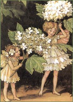 ≍ Nature's Fairy Nymphs ≍ magical elves, sprites, pixies and winged woodland faeries - Snow Ball fairy, Mary Cicely Barker