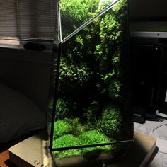Pre-order: The Vertex ZERO L Pre-designed Completed | Etsy Rare Roses, Moss Terrarium, Moss Wall, Door Steps, Unique Trees, Design Language, Glass Vessel, Lights Background, Natural Disasters
