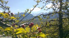 Primavera in #ValDiNon #Dolomiti #mele