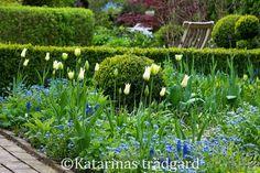 Katarinas trädgård: maj 2015
