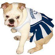 Cute  Indianapolis Colts Bulldog Cheerleader Dress Royal Blue-White Pet Cheerleader Dress #NFL #NFLPetProducts #PetProducts #IndianapolisCults #IndianapolisCultsPets #Cults #Pets #Dogs #AdorabullBulldogs #PawsativeParents