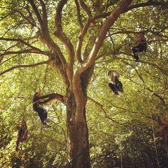 Treeclimbing for kids... #treeclimbing #climbing #forest #woods #landes #grimpedarbre #grimperdanslesarbres #arbre #tree #wildkids #exploreoutdoors