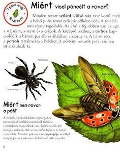 Picasa Webalbumok Bugs, Butterflies, Science, Teaching, Education, Picasa, Creative, Butterfly, Flag