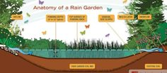 Are you wondering about rain gardens? Welcome to Washington State University Extension's rain garden website. This site provides everything you need to know about rain gardens; from the basics of how they work to building… Garden Images, Garden Photos, Rain Garden Design, Retention Pond, Western Washington, Garden Soil, Gardening, Garden Tips, Gardens
