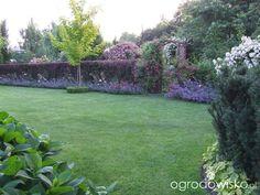 Kolorowy ogród na piasku - strona 511 - Forum ogrodnicze - Ogrodowisko