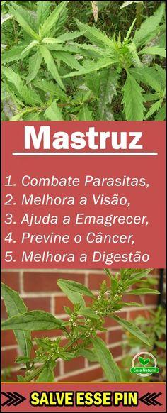 Os 20 Benefícios do Mastruz Para Saúde! #Mastruz #beneficiodoMastruz #benefíciosdoMastruz #Mastruzparaqueserve #Mastruzbenefícios #Mastruzbeneficios #comousarMastruz #efeitoscolateraisdoMastruz #propriedadesdoMastruz #paraqueserveMastruz #natural #natureza #plantação #planta #fruta #hortaemcasa #tuasaude #melhorcomsaude #globoreporte #bemestar #saúde #nutrição #alimentação #dicasdesaude Cute Diy Room Decor, Dietas Detox, Cute Diys, Salvia, Spices And Herbs, Aloe Vera, Natural Remedies, Health Tips, Herbalism
