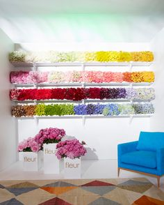 gradient floral installation (by Paul Hecker and Fleur's Florist)