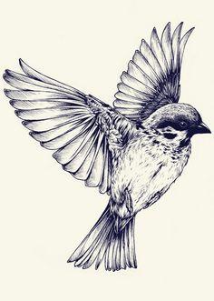 Sparrow  bird in flight