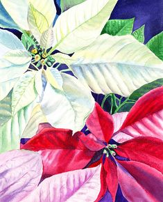 'Poinsettia Christmas Collection' - http://irina-sztukowski.artistwebsites.com/featured/poinsettia-christmas-collection-irina-sztukowski.html