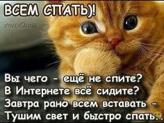 "Photo from album ""НОЧЬ"" on Yandex. Good Night, Good Morning, Funny Cats, Funny Animals, Weird Trees, Funny Emoticons, Cute Cartoon Wallpapers, Mother Quotes, Just Smile"