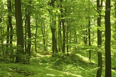 Latest News : Setting an ambitious plantation target, the state government will have various departments plant 5 crore trees all over the 75 forest divisions under various plantation schemes this year. The plantation drive will also involve farmers, common people and schoolchildren.