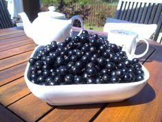 Blackcurrant harvest