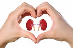 American kidney care best liver and kidney cleanse,capd dialysis chronic kidney disease stages,fruits good for kidney disease how to prevent kidney failure. Kidney Cyst, Kidney Dialysis, Polycystic Kidney Disease, Kidney Infection, Chronic Kidney Disease, Diálisis Peritoneal, Danette May, Kidney Disease Stages, Hacks