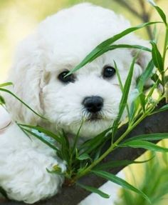 53 Best Sweet Puppies And Kitties Images Animal Babies Cut