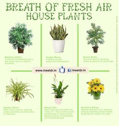 Six Fresh Air House #Plants :: www.meetdr.in  #BambooPalm, #SnakePlant, #ArecaPalm, #SpiderPlant, #PeaceLily, #GerberaDaisy