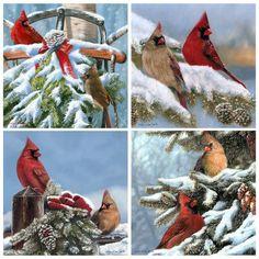 Cardinals Coaster Set